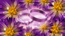 Royalty Free HD Video Clip of Rotating Wedding Rings Surrounded by Bouquets of Flowers