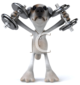 Royalty Free Clipart Image of a Jack Russell Terrier Lifting Weights