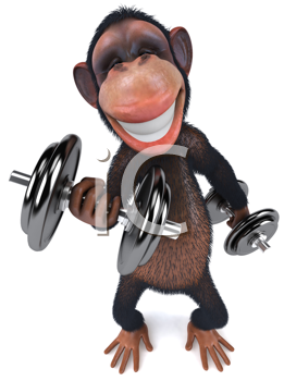 Royalty Free Clipart Image of a Monkey With Dumbbells
