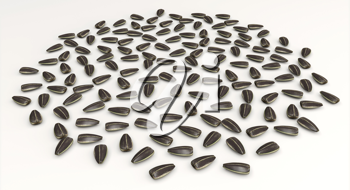 Sunflower seeds arranged with golden ratio spacing, randomly generated rotations.