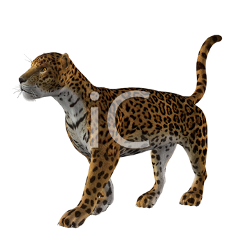 Royalty Free Clipart Image of a Cheetah