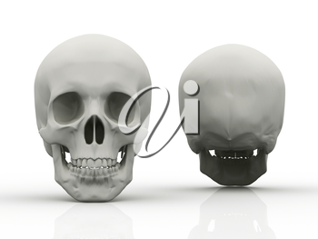 Royalty Free Clipart Image of the Front and Back of a Skull