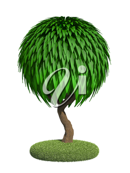 Decorative Tree with Spherical Krone Isolated on White Background.