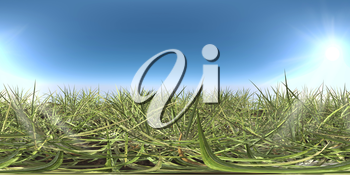green grass and sky HDRI map 3d illustration