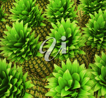 Pineapples background