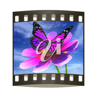 Beautiful Cosmos Flower and butterfly against the sky. The film strip