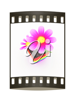 beautiful flower in the colorful pot. The film strip