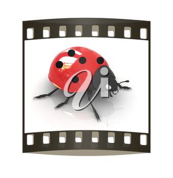 Ladybird on a white background. The film strip