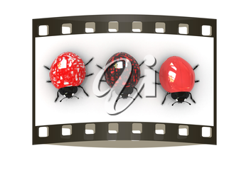 Ladybirds on a white background. The film strip