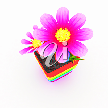 beautiful flower in the colorful pot. 3D illustration. Anaglyph. View with red/cyan glasses to see in 3D.