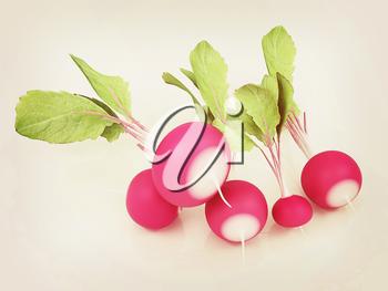 Small garden radish on a white background. 3D illustration. Vintage style.