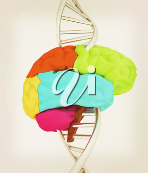 Brain and dna. 3d illustration