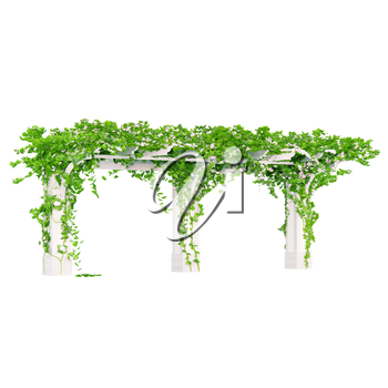 Wooden angled construction for the gardening with nice flowers on it pergola
