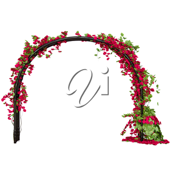 Arched pergola with red rose buds and green leaves