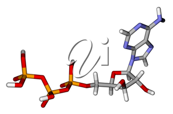 Optimized molecular structure of adenosine triphosphate (ATP) on a white background