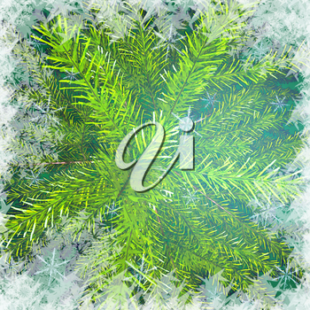 Christmas tree branches against snow background. Christmas green background.